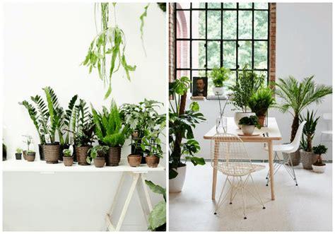precios de plantas de interior plantas de interior precios plantas plantas de interior