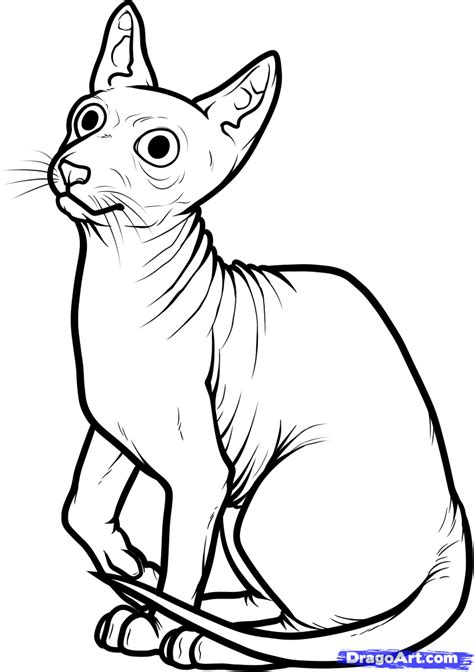 hairless cat coloring page how to draw a sphynx cat step by step pets animals