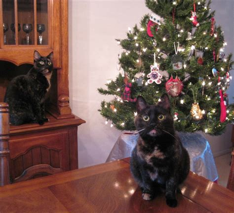 cat first seen christmas tree cats and trees
