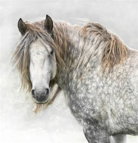 love the gray 229 best images about uuuu horses uuuu on pinterest