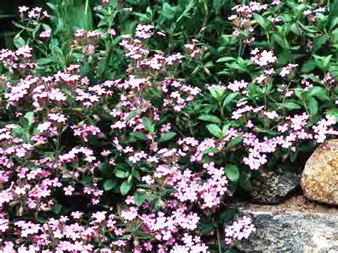 tanaman hias  taman dinding vertikal terpopuler
