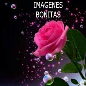 imagenes lindas google imagenes bonitas android apps on google play