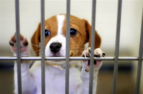 pet store that sells puppies chicago bans puppy mill pet stores