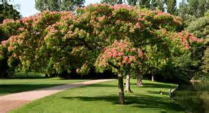 quel arbre choisir pour s offrir un coin d ombre au jardin