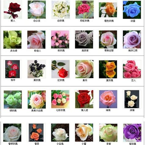 exotic color names different types of roses and their names www imgkid com