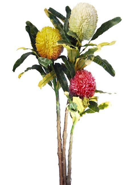 fiore tropicale fiore tropicale protea bacsia fiori e piante