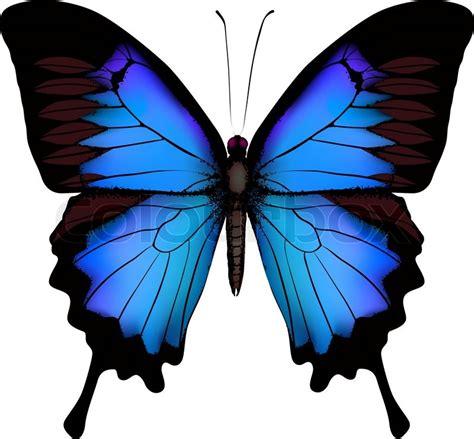 imagenes de mariposas moradas y azules blau schmetterling papilio ulysses mountain swallowtail