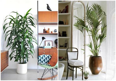 como decorar plantas con macetas 30 im 225 genes de inspiraci 243 n para decorar con macetas plantas