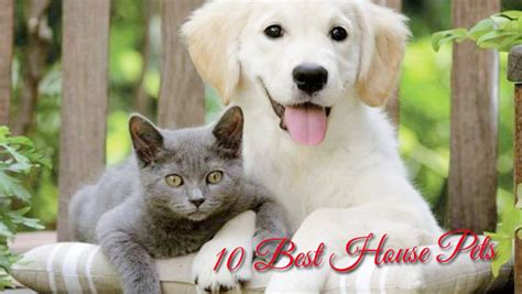 best house dogs best house pets 28 images most expensive houses in the world attachment browser