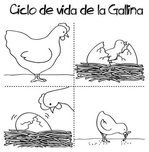 ciclo de vida del pollo para colorear e imprimir apexwallpaperscom pinterest el cat 225 logo global de ideas