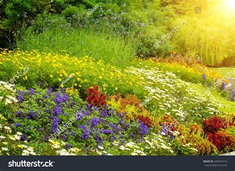 Bright Garden Flowers Beautiful Background Of Bright Garden Flowers Stock Photo 242041513