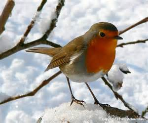actu animaux restos du pour oiseaux du ciel en hiver
