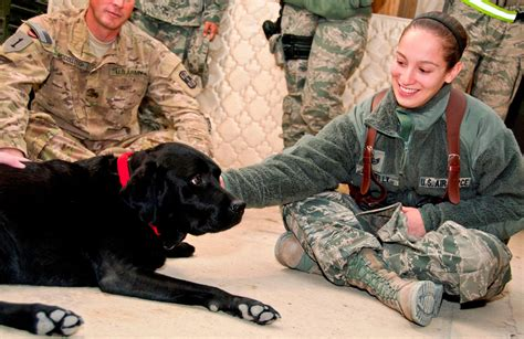 therapy dogs for ptsd pet therapy in the treatment of post traumatic stress disorder you got the power