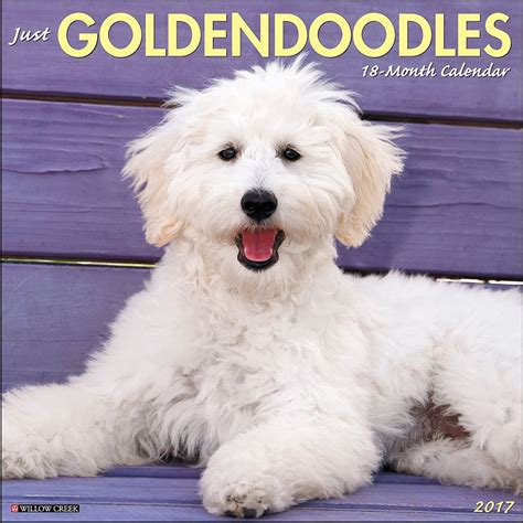 Just Goldendoodles 2017 Wall Calendar 9781682341063