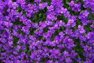 25 romantic purple flowers