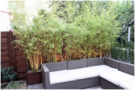 Bac Bambou Terrasse by Bambou En Bacs Terrasse Shamwerks Terrasse Project Bacs