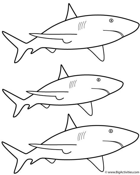 big shark coloring page 3 great white sharks coloring page sea marine