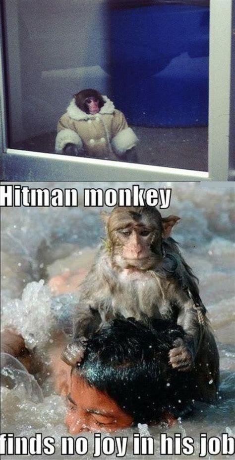 Monkey Meme - ikea monkey know your meme