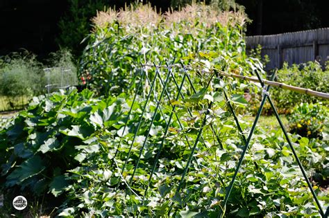 Planning For A Fall Vegetable Garden Autumn Vegetable Garden