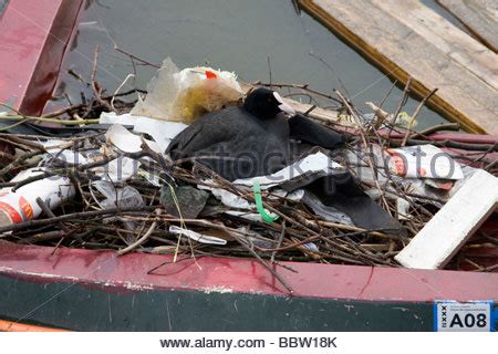 trash boat amsterdam netherlands amsterdam coot on nest in tyre in canal in