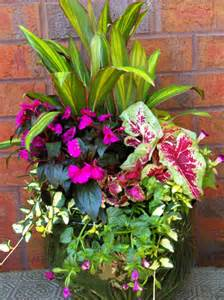 Planter Ideas Sun by Shade Garden With Cordyline New Guinea Impatiens