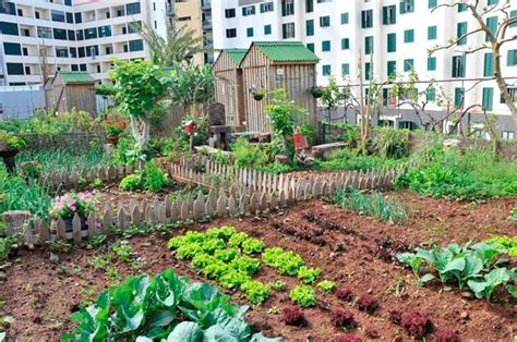Roof Top Vegetable Garden Roof Garden Pinterest Rooftop Rooftop Vegetable Garden