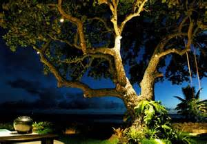 Low Volt Landscape Lighting - sabado blog light tree