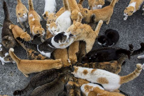 cat island in japan aoshima japanese island also known as cat island here