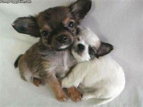 puppy hug puppy hug funnypuppysite