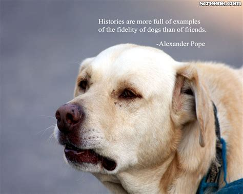 quotes about puppies o quotes quotesgram
