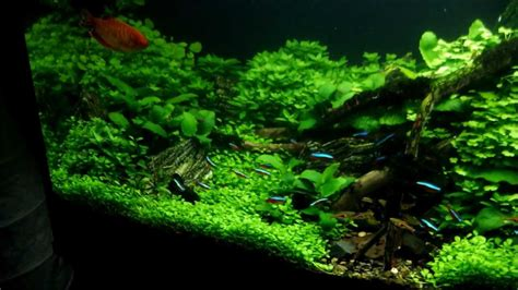 aquascape quot i follow rivers quot 80 tage update 80 days update