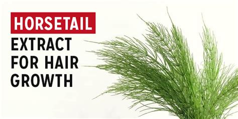 horsetail hair growth products mm ingredient horsetail extract for hair growth