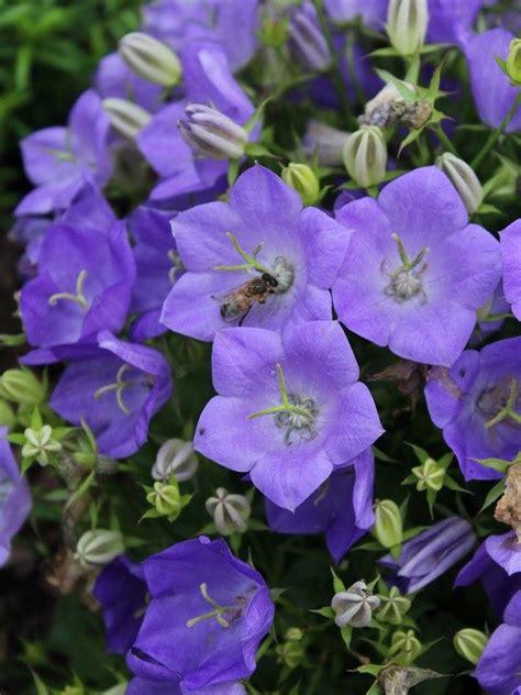 17 Best Images About Politics On Politics Nut - 17 best images about thema week nut bijen en vlinders