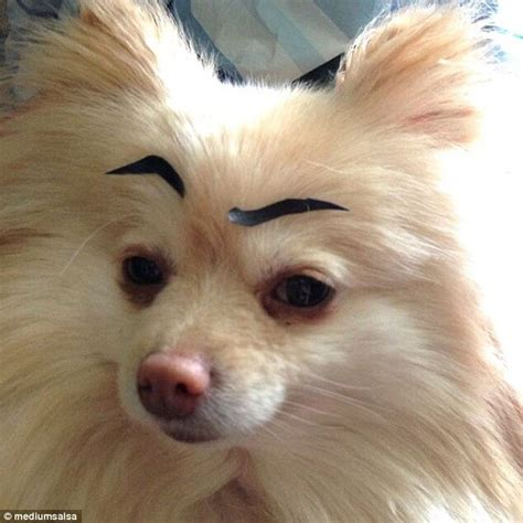 eyebrows on dogs 20 hilarious photos of dogs with eyebrows that will make you howl with laughter
