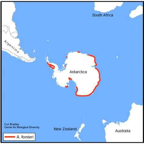 where do penguins live map where do penguins live map for