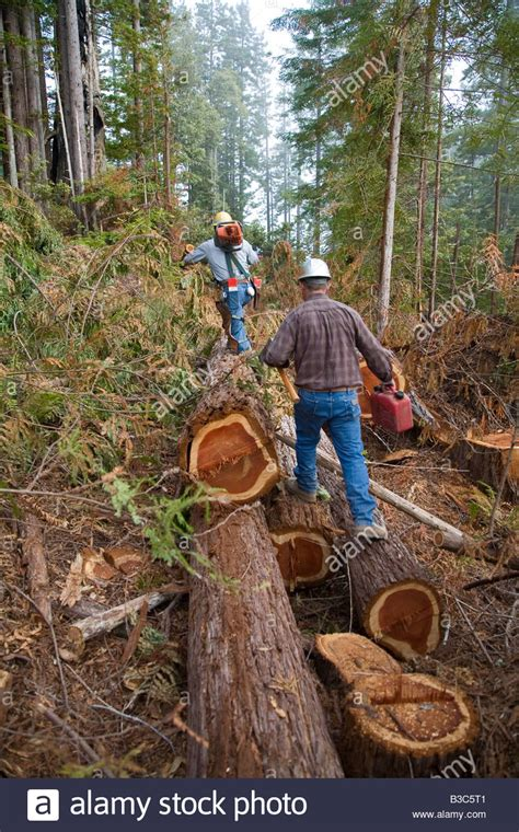 Logging Of Redwoods In Northern California Stock Photo