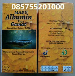 Bibit Ikan Pare Kediri madu albumin plus gamat ekstrak ikan gabus malang kediri