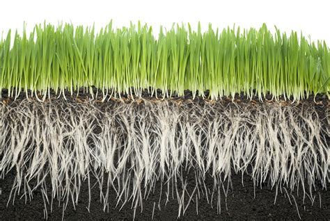 Google Images Grass Roots Landscaping