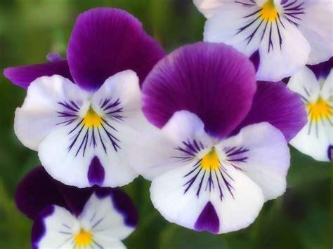 i fiori di bach funzionano kinesiologia luca corradini i fiori di bach