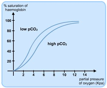 bohr effect diagram 3 2 4 haemoglobin biologypost
