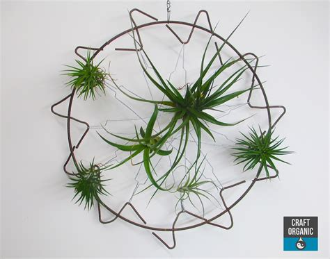 Art And Craft For Home Decoration small tillandsia screen craft organic