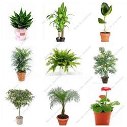 Small Indoor Plants For Desk Get Cheap Small Indoor Plants Aliexpress