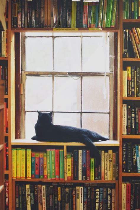 cats and books books cats is edward gorey libraries