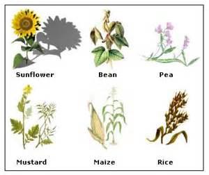angiosperms life styles in angiosperms tutorvista com