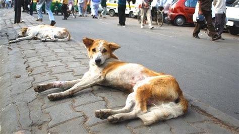 amazing      street dog  india