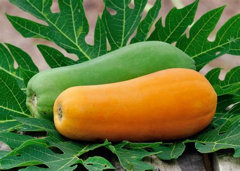 what color is papaya miraculously real health benefits of papaya you ought to