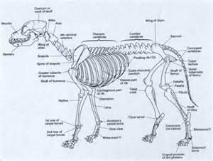 anatomy coloring book vet terriers anatomy