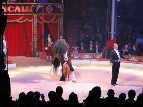 Größte Pferd Der Welt by Roncalli In L 252 Beck Zirkus Zauber Voller Poesie Strandblick