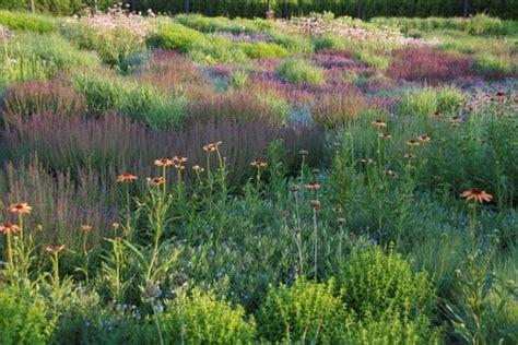 gartengestaltung gräser garten 13 besten stauden und gr 195 164 ser bilder auf