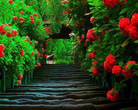 hd themes of flowers wallpaper s collection 171 flowers wallpapers 187